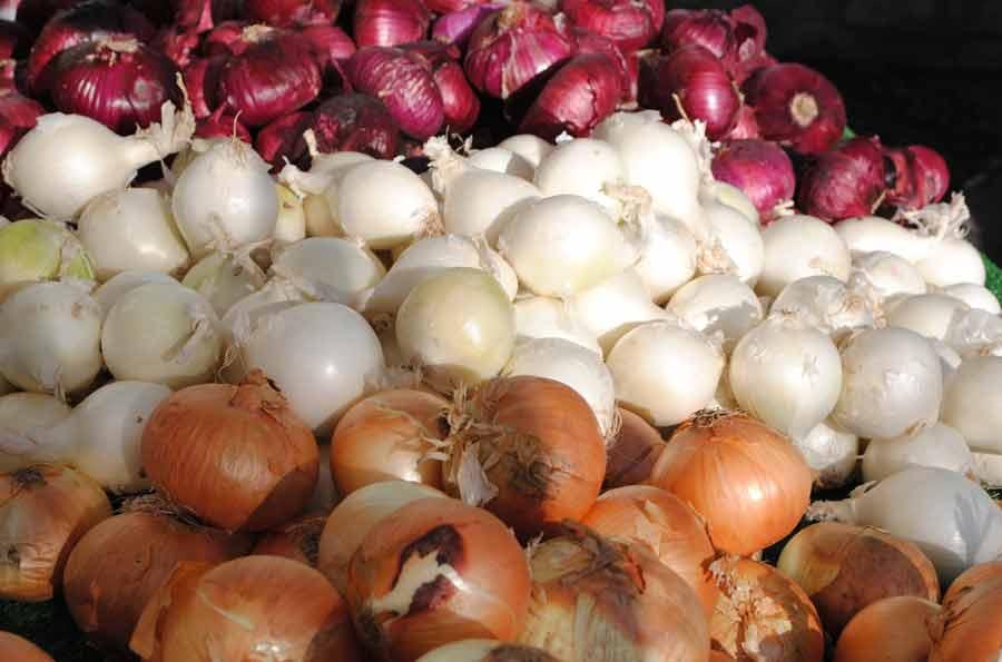 Лук севок на подоконнике — выращивание лука в домашних условиях