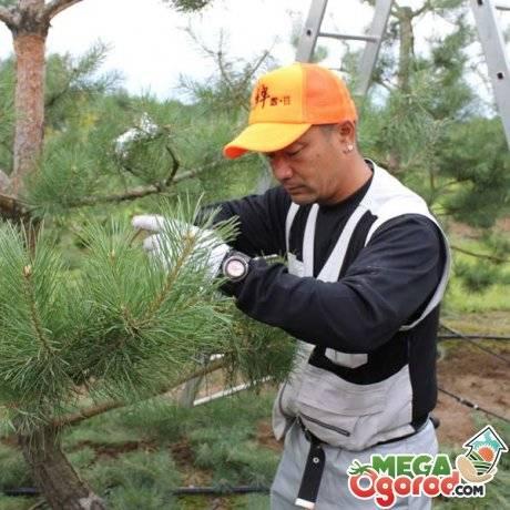 Обрезка деревьев: 7 правил формирования кроны