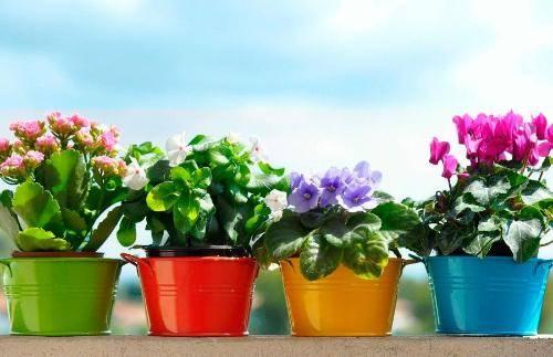 Орхидеи: как ухаживать, пересадка, размножение, подкормки