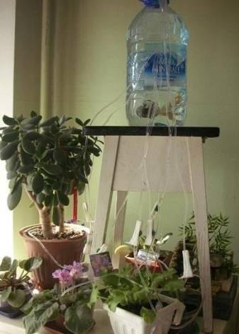 Автополив комнатных растений:  топ самых покупаемых систем!