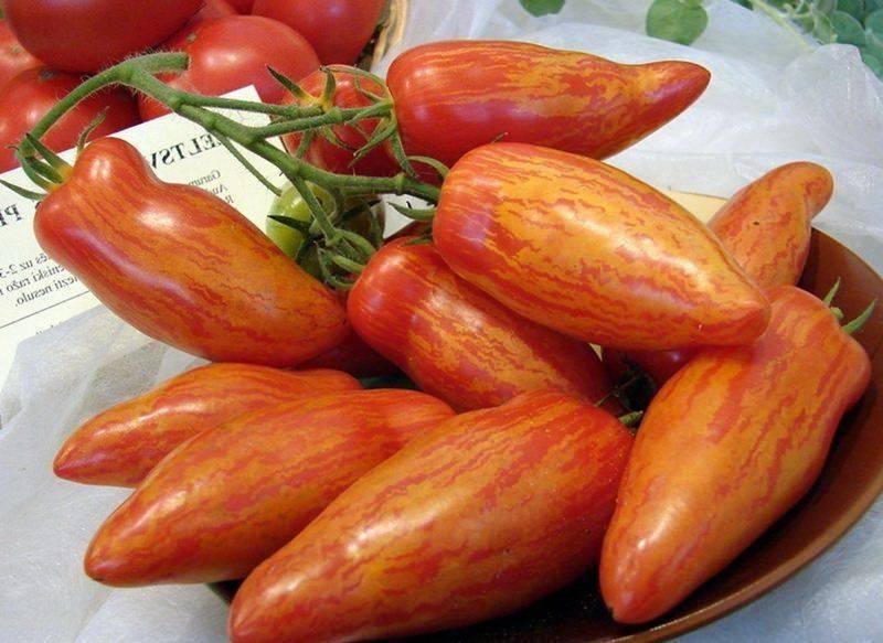 Московский деликатес: описание сорта томата, характеристики помидоров, посев