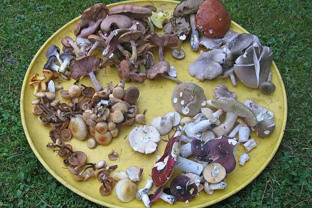 Где растут опята в подмосковье и когда начинается сбор грибов: основные направления