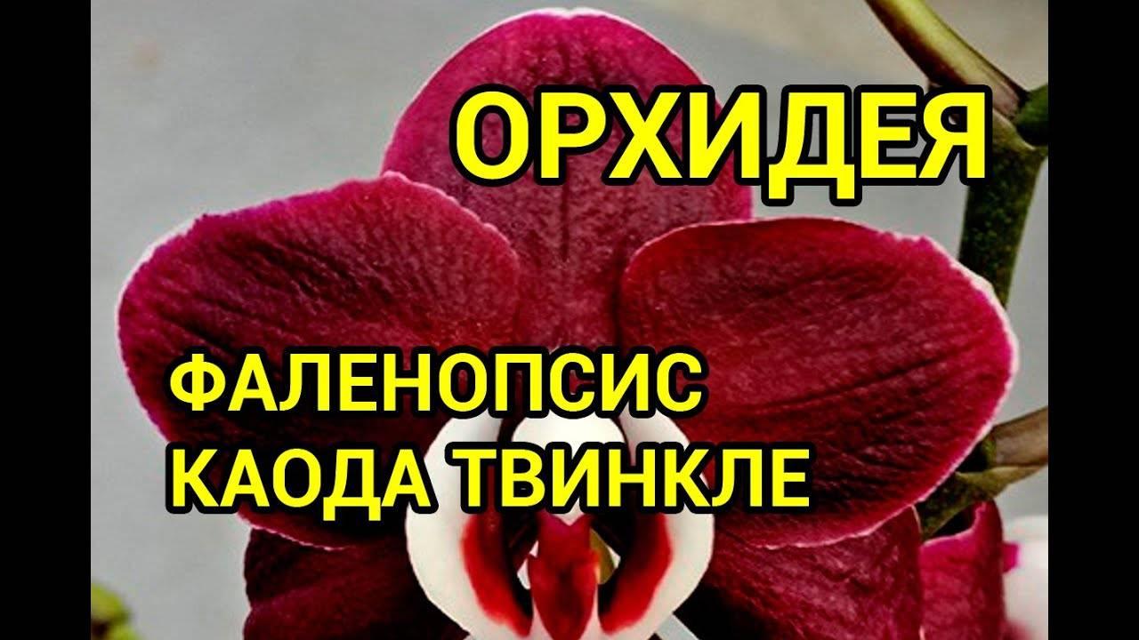 Орхидея: родина и история