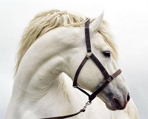 Лошадь искать