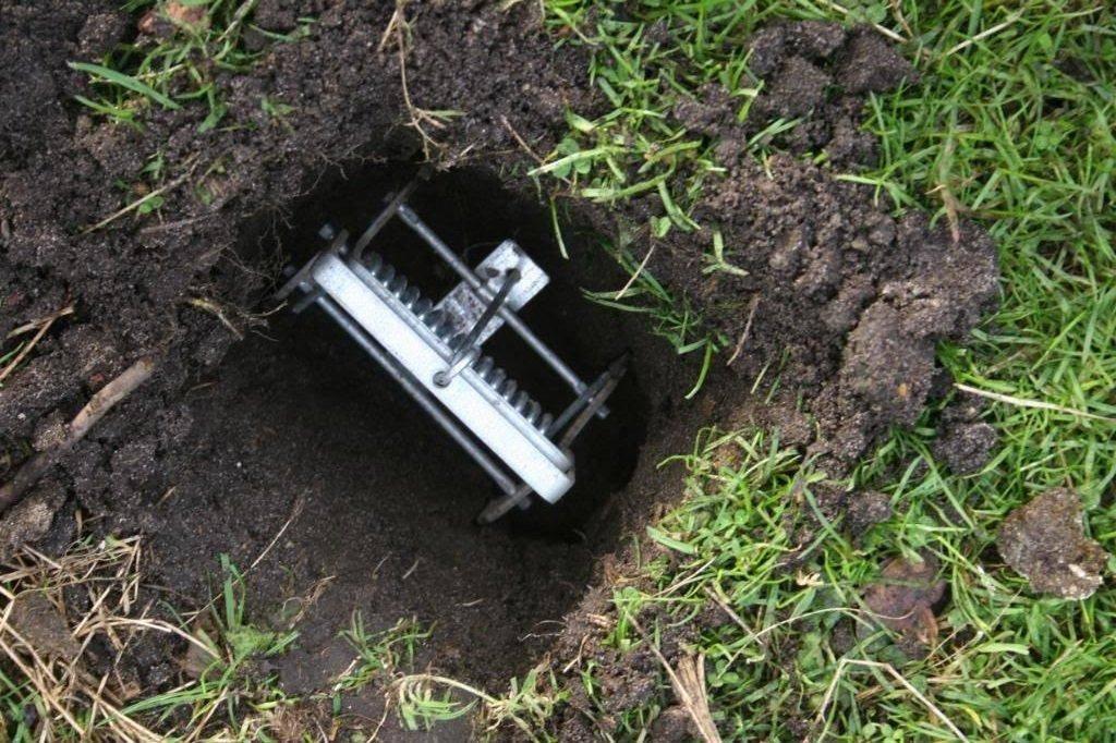 Как навсегда избавиться от кротов на огороде и дачном участке: обзор методов