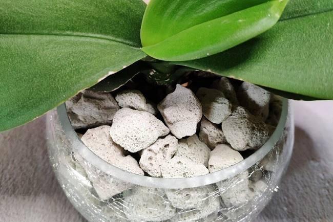 Орхидеи: применение витаминов и стимуляторов