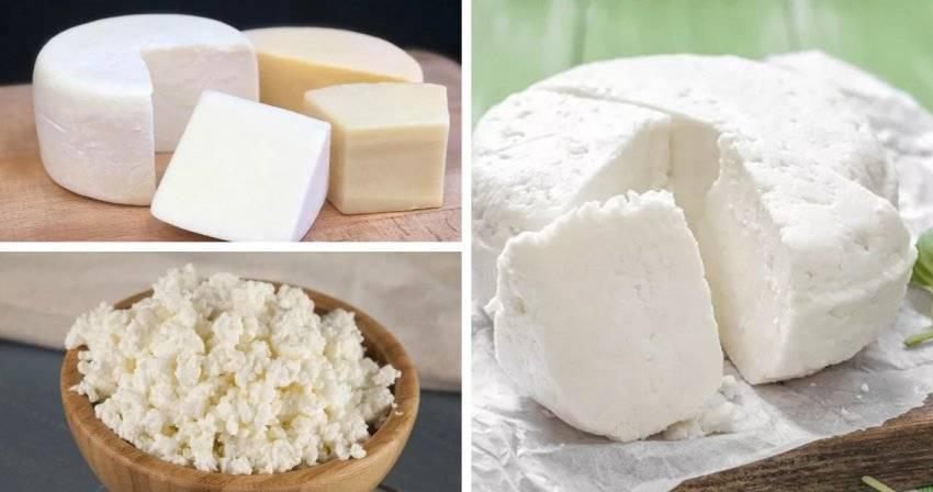Овечье молоко: полезные свойства и вред