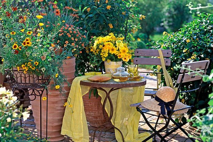 Энотера (ослинник): выращивание в саду, виды