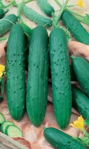 Огурцы зозуля, описание сорта с фото, выращивание, отзывы о семенах, урожае