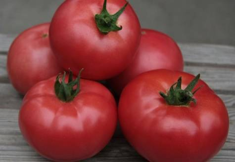 Томат кибо: характеристика и описание сорта, урожайность отзывы фото