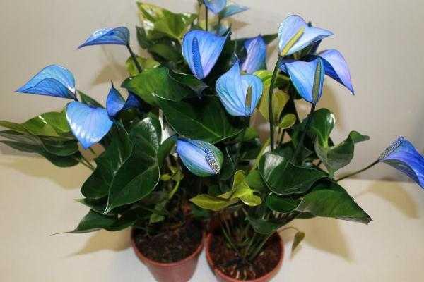 Самые неприхотливые комнатные растения, цветущие круглый год