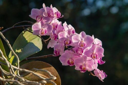 Орхидеи в природе - как и где произрастают. интересные факты о жизни растения