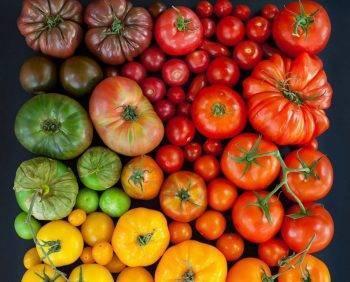Выбираем сорта помидоров для теплиц в подмосковье на 2020 год: фото и отзывы