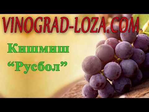 Описание винограда русбола