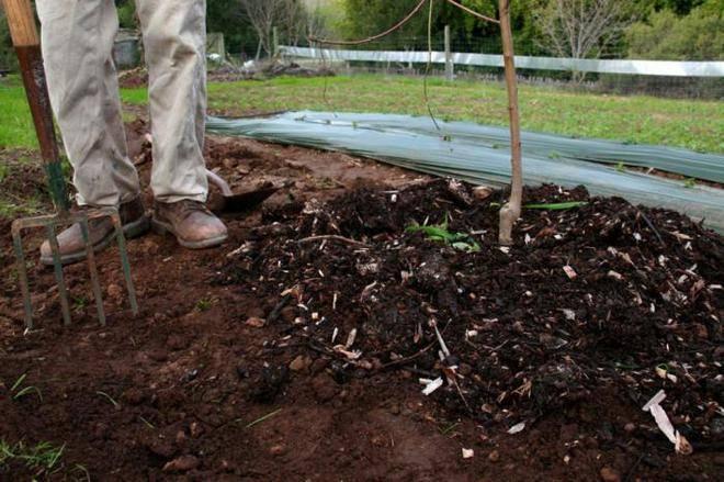 Подкормка яблони весной: чем, как и когда удобрять деревья