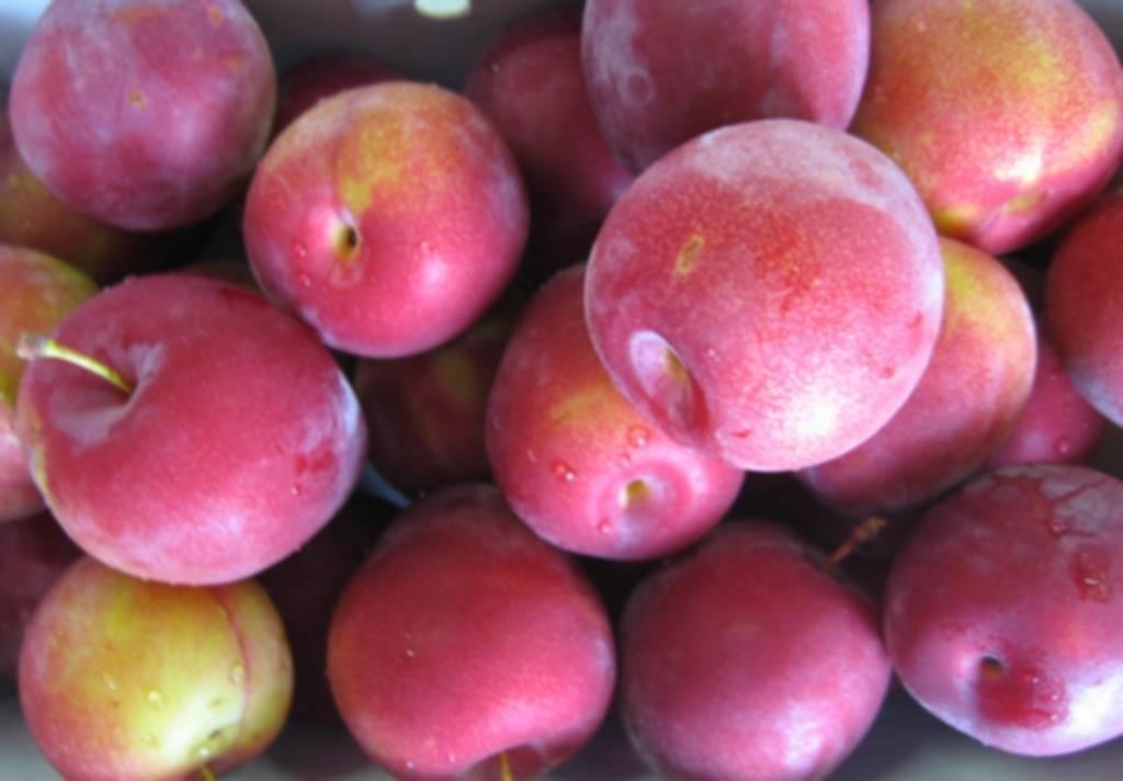 Сорта слив с крупными и сладкими плодами