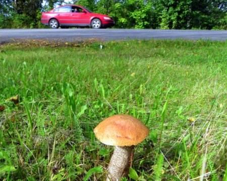 Мифы vs факты. можно ли собирать грибы в високосный год?
