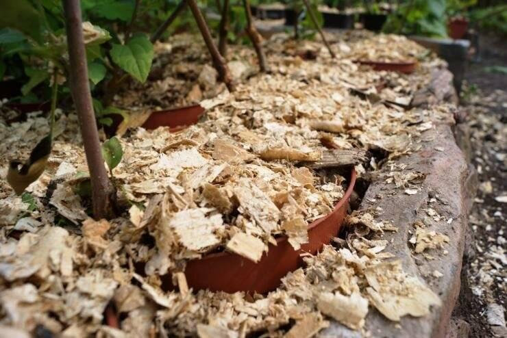 Опилки для огорода: польза и вред, применение как удобрение