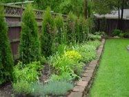 Какие растения лучше высаживать на участке вдоль забора