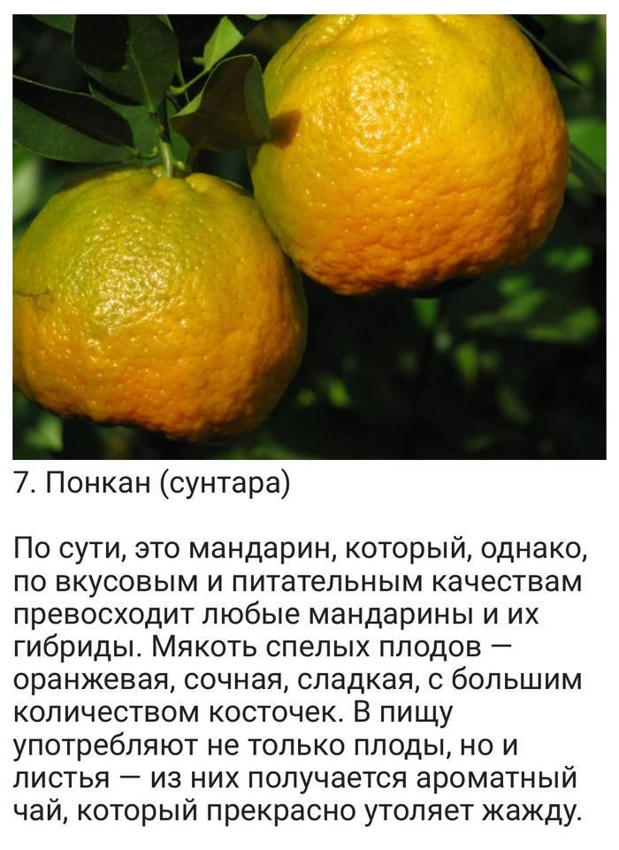 Гибрид мандарина: существующие виды и их названия