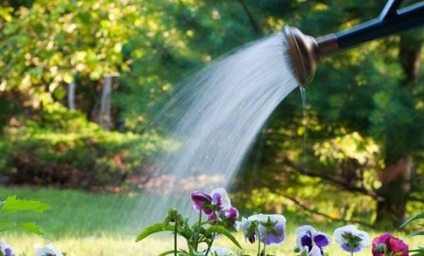 Что делать, если петуния не цветет