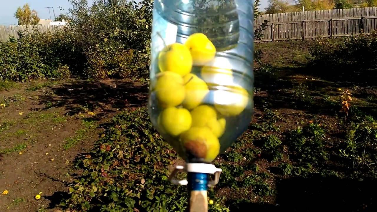 Как правильно собрать и сохранить урожай яблок? когда снимать? на зиму — ботаничка.ru