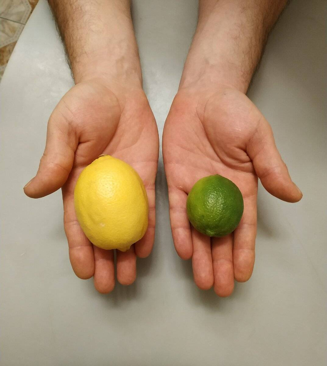 Лимон и лайм: разница цитрусов и их польза