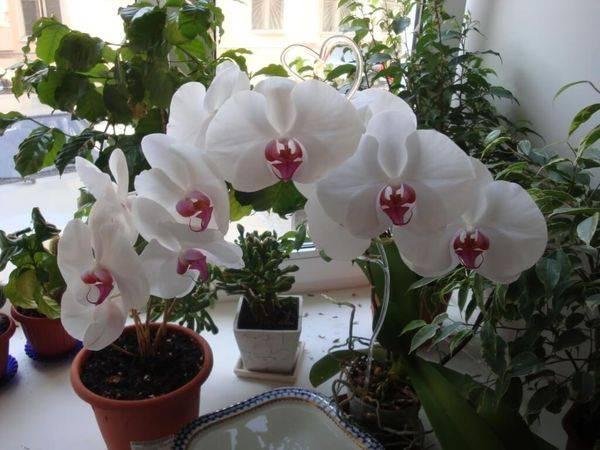 Популярные виды орхидей: описание, рекомендации по выбору сорта для выращивания – дачные дела