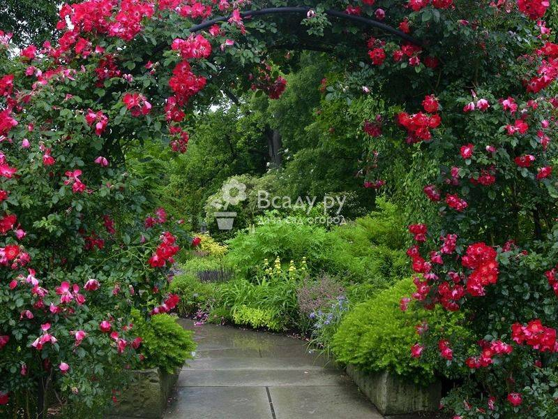 Вьющиеся растения для дачи — фото с названиями