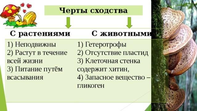 Сравнение строения животных, растительных, грибных и бактериальных клеток