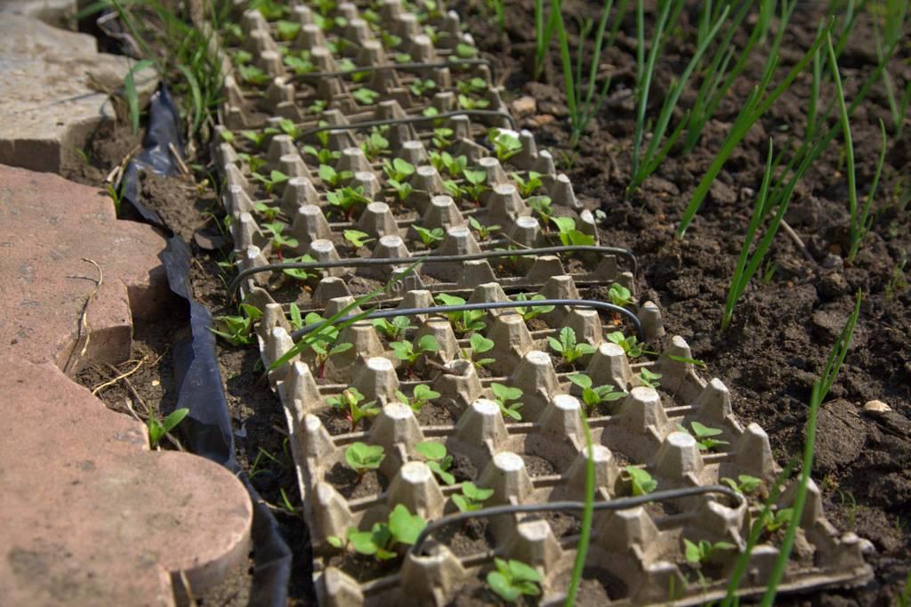 Как посеять морковь весной на грядке чтобы не прореживать
