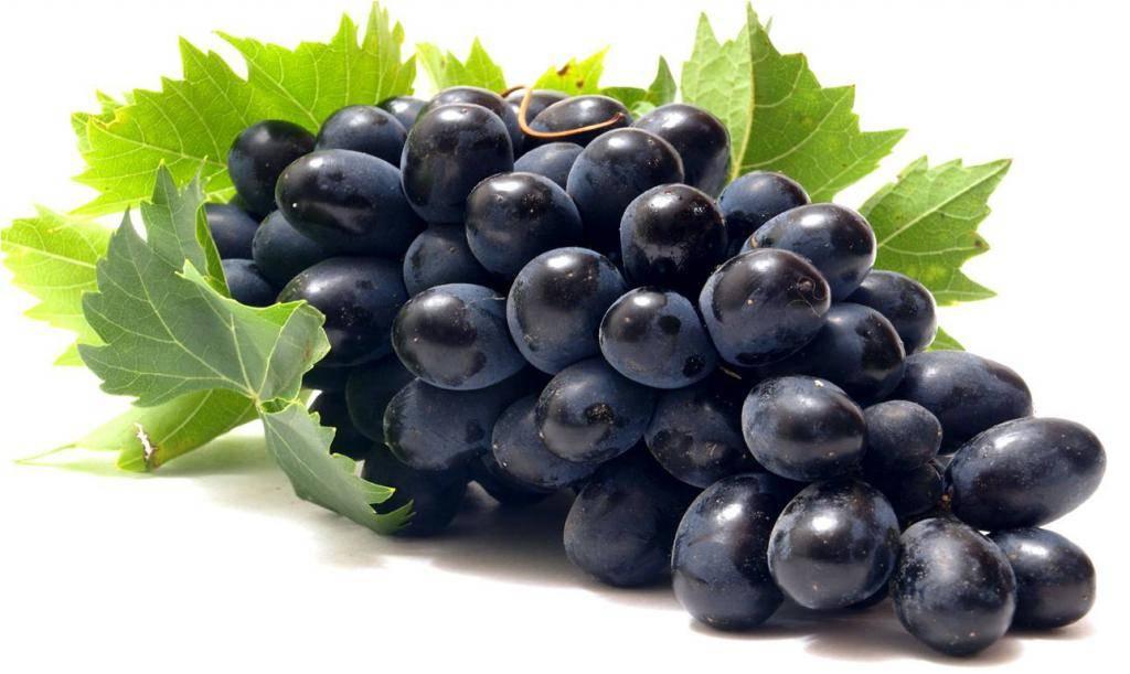 Виноград кодрянка: посадка и уход за сортом в открытом грунте