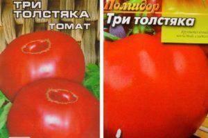Томат шапка мономаха: сорт для любителей крупных помидоров