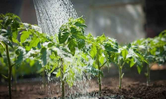 Насколько эффективен и как применяется лазурит от сорняков?