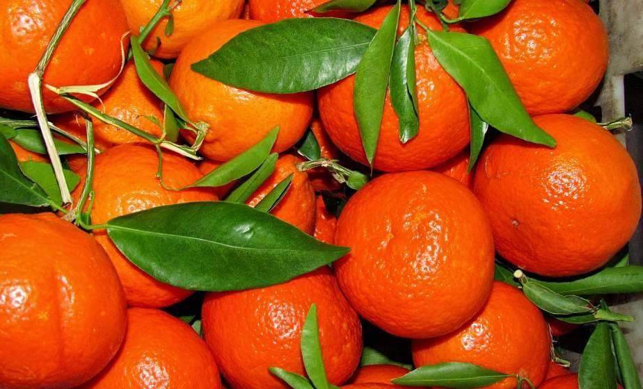 Какие витамины в мандаринах, состав и пищевая ценность на 100 г продукта