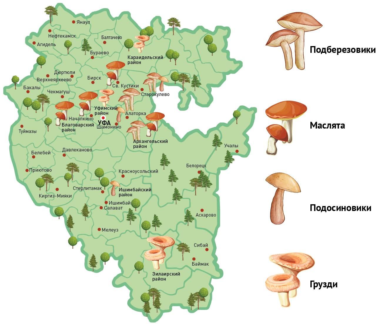 Грибы в тульской области 2020: календарь, карта, отзывы » новости онлайн