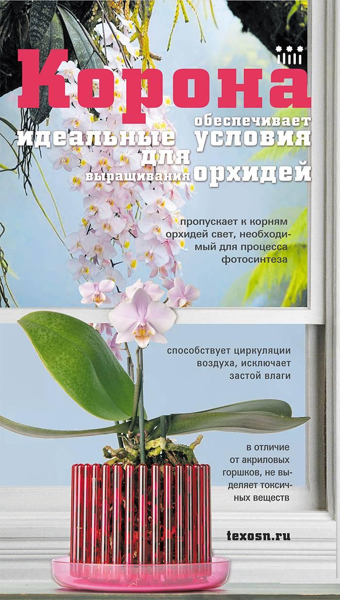 Правильный горшок для орхидеи: какой он, насколько важен выбор
