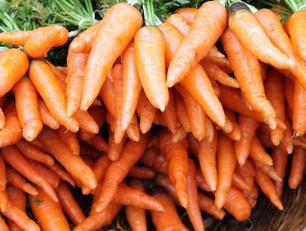 Болезни моркови: при выращивании, описание с фото, борьба с ними и лечение