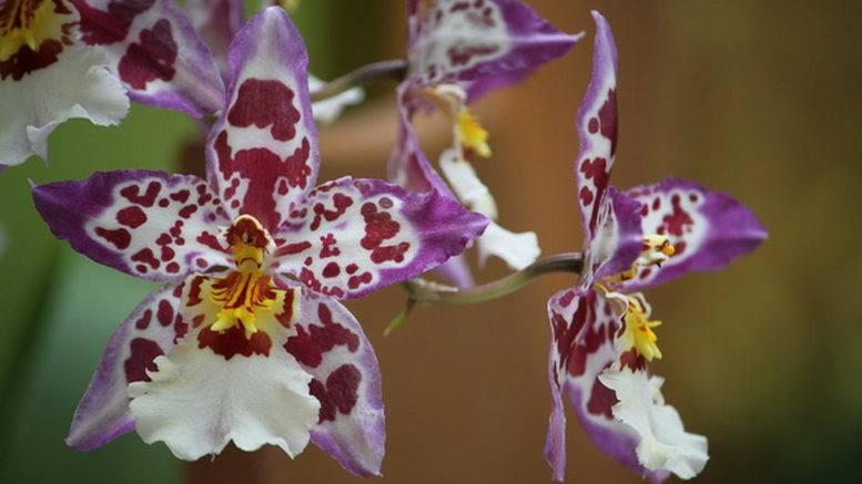 Главный вопрос: как ухаживать за орхидеей в горшке, купленной в магазине?