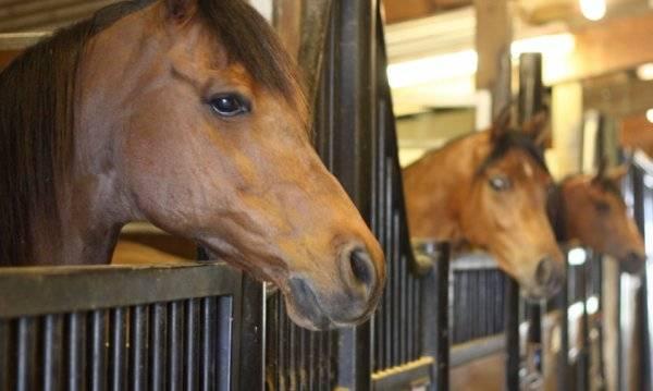 Как правильно строить денник для лошадей