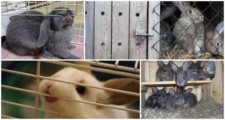 Почему кусается кролик: что делать, если питомец ведет себя агрессивно