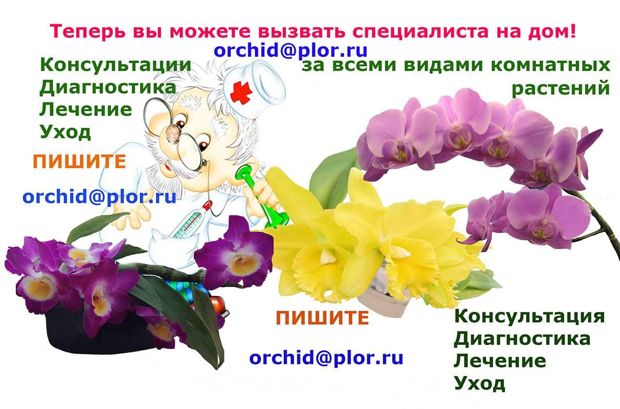 Орхидея - описание цветка и подробности ухода за ним (85 фото)