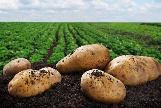Минеральные удобрения для картошки осенью — технология подкормки