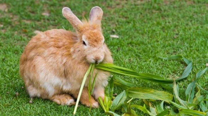 Крапива в рационе кроликов — изучаем правила кормления