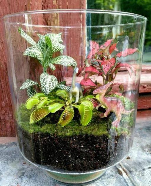 Венерина мухоловка — растение-хищник на подоконнике