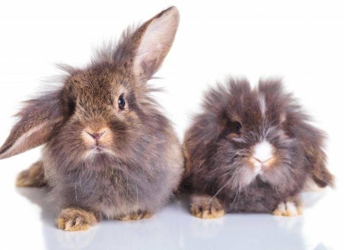 Сколько длится беременность у кроликов: сколько вынашивают крольчат и сроки