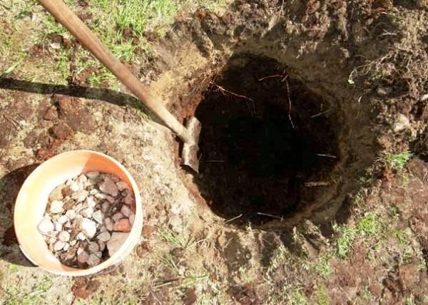 Как правильно посадить яблоню весной, в том числе посадка саженцами, пошаговое руководство, схема, инструкция, как сажать на украине + видео