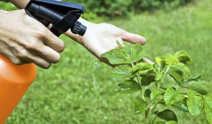 Биопрепараты для защиты растений: виды и способы применения | здоровье | селдон новости