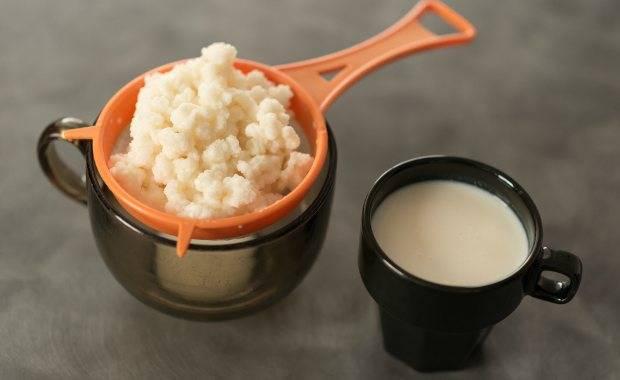Чайный, молочный и рисовый гриб