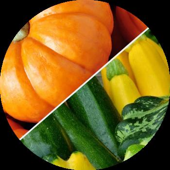 Как визуально отличить рассаду тыквы и кабачка